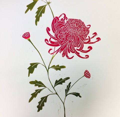 Chrysanthemum Magic